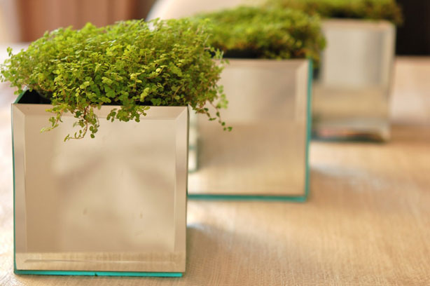 Bevelled Mirror Planter